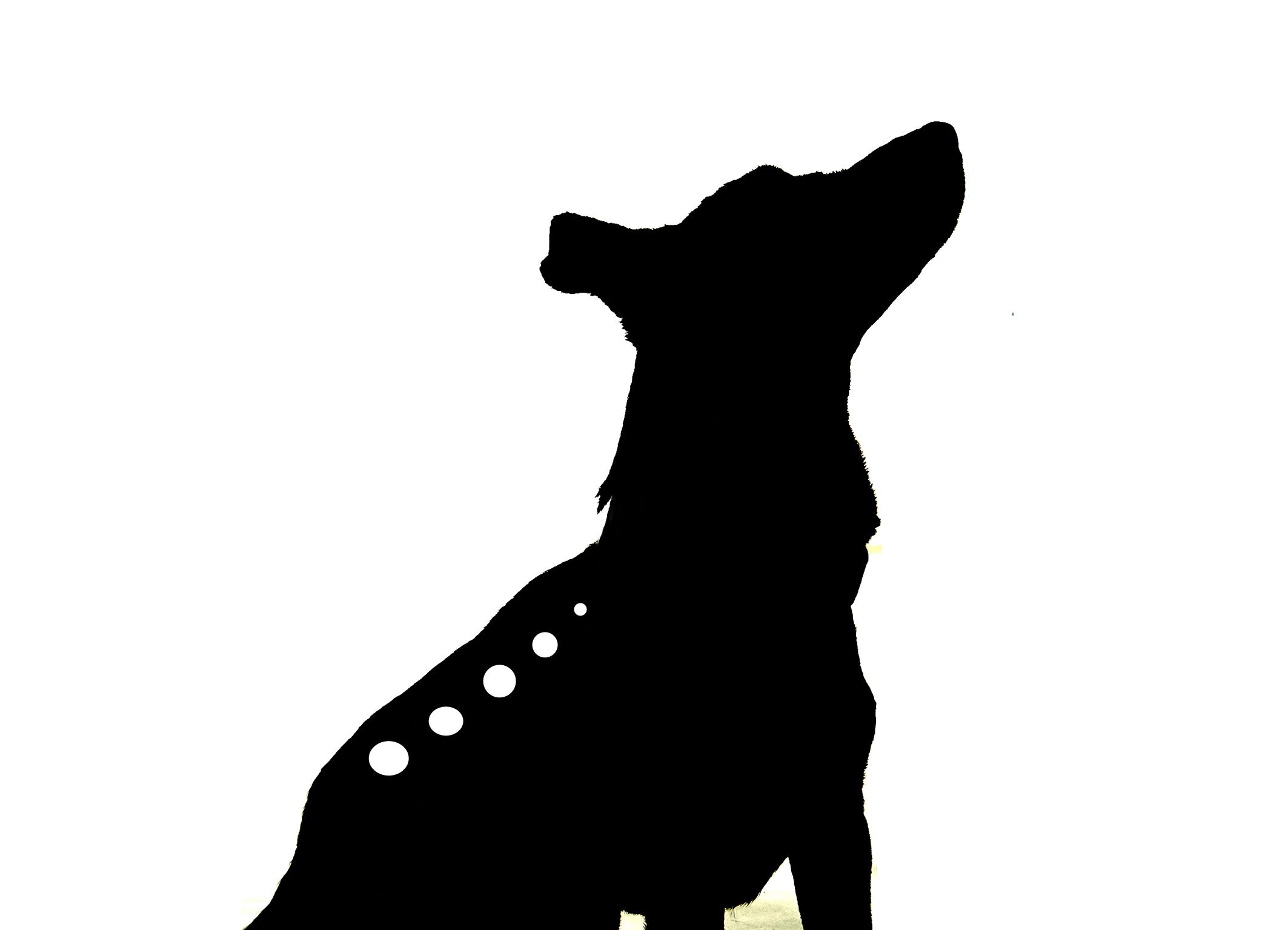 Hundephysiotherapie Rosenhäger